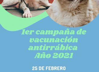 Hoy, Jueves 25: Campaña Vacunación Antirrábica para perros y gatos